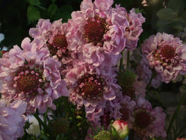 オークリーフ(入口には花水木を・・)_f0049672_15191856.jpg