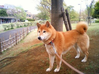 桜が散って…_b0011075_2254325.jpg