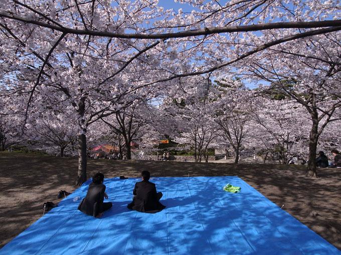 2011桜散歩 418 賑わい_e0082981_23393563.jpg