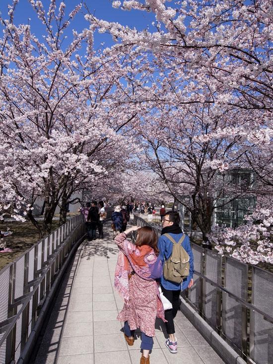 2011桜散歩 418 賑わい_e0082981_23402724.jpg