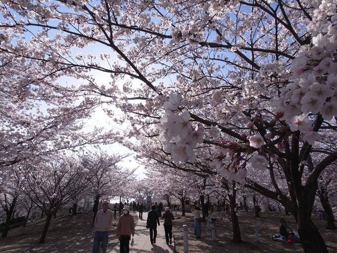 2011桜散歩 418 賑わい_e0082981_23405129.jpg