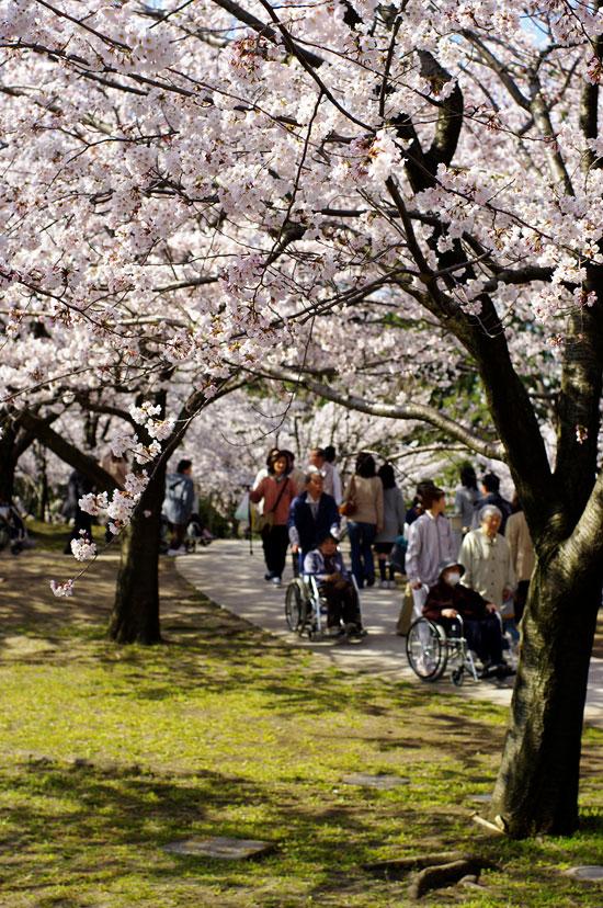 2011桜散歩 418 賑わい_e0082981_23411735.jpg