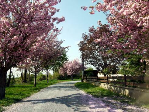 シャンブランと春の花たち_c0090198_2481911.jpg