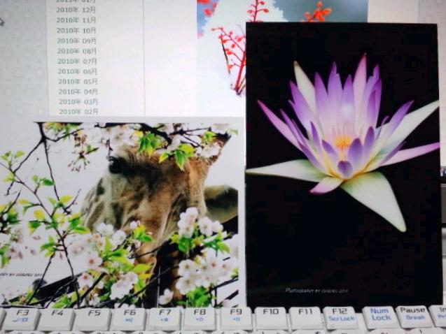 ポストカード_b0137399_18335428.jpg