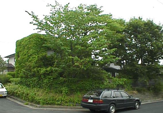 壁・屋根緑化_e0054299_15315875.jpg