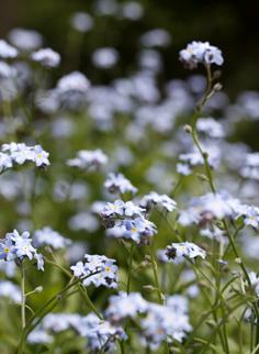 Cascade Bouquet_b0208604_13465892.jpg