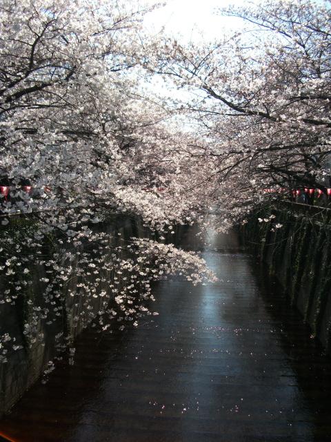 某所で桜屋_c0188809_20275975.jpg