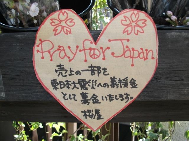 某所で桜屋_c0188809_20282379.jpg