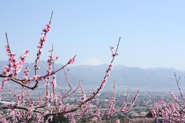 山梨の桃の花_c0188809_2111792.jpg