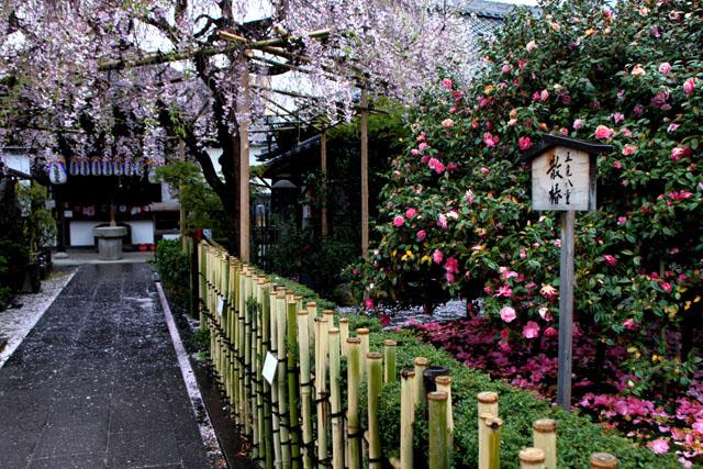 花は終盤_e0048413_21181979.jpg