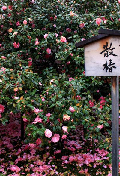 花は終盤_e0048413_21183296.jpg