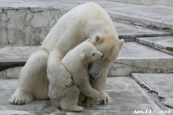 ララと赤ちゃん♪ その3_c0048117_22253110.jpg
