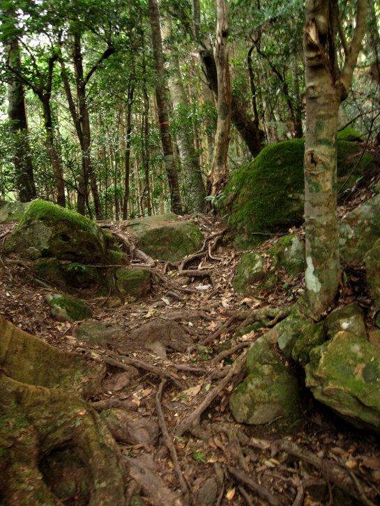 熊野古道編(8):乳岩(10.3)_c0051620_6172386.jpg