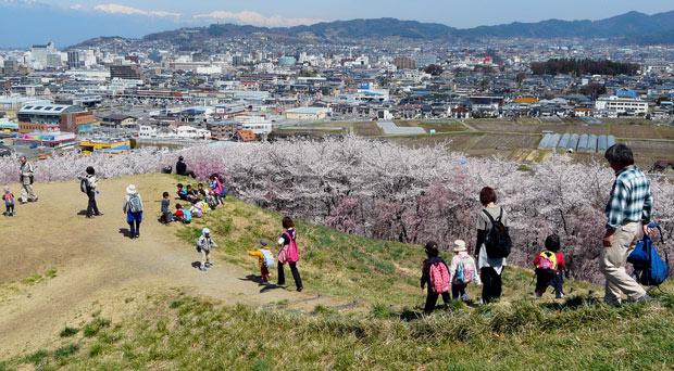 弘法山古墳の桜(松本市)_d0066822_1610734.jpg