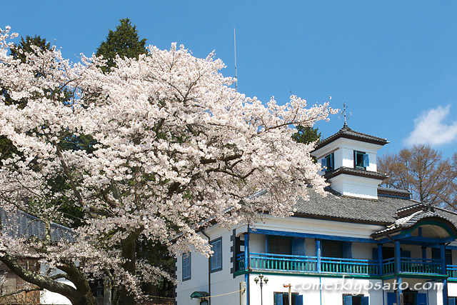 津金の三代校舎の桜_b0179231_2233690.jpg