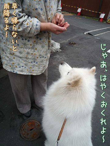 火曜日のおじ散歩_c0062832_444720.jpg