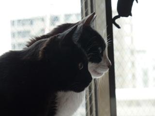 横顔猫 空ろった編。_a0143140_23513116.jpg