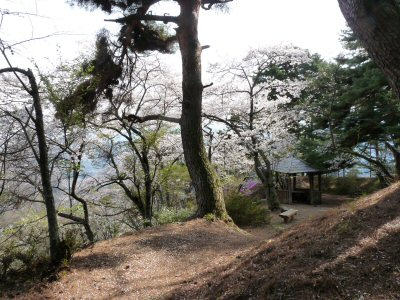 神田の大糸桜、満開♪_f0019247_22573734.jpg