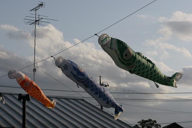 鯉のぼり_b0177950_17464772.jpg