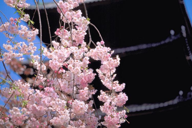 仁和寺で_c0181552_20593519.jpg