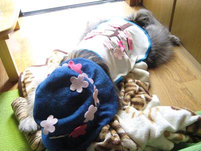 背中の桜2_a0119263_21282389.jpg