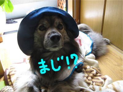背中の桜2_a0119263_2129218.jpg