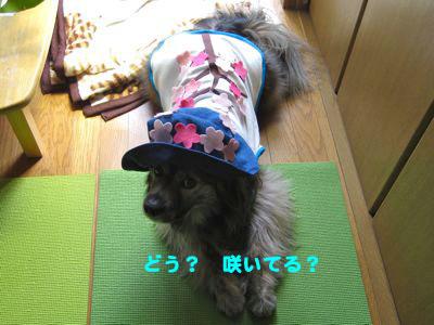 背中の桜2_a0119263_21292560.jpg