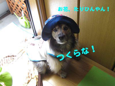 背中の桜2_a0119263_21304055.jpg