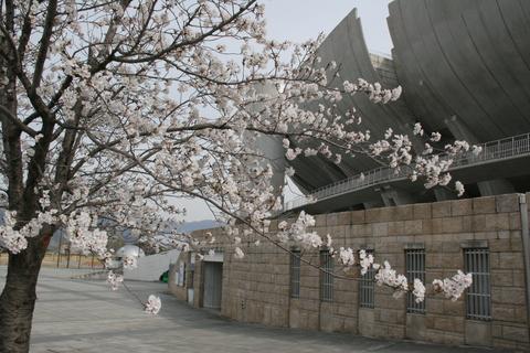 桜と球場_b0219267_22383789.jpg