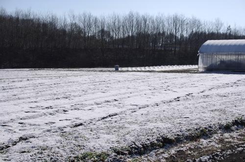 四月の雪 / レタス、パセリのタネまき_c0110869_2142026.jpg