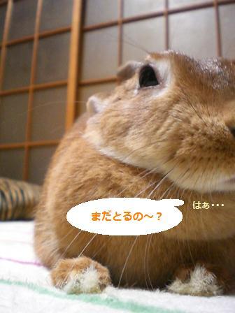 d0134977_20124377.jpg