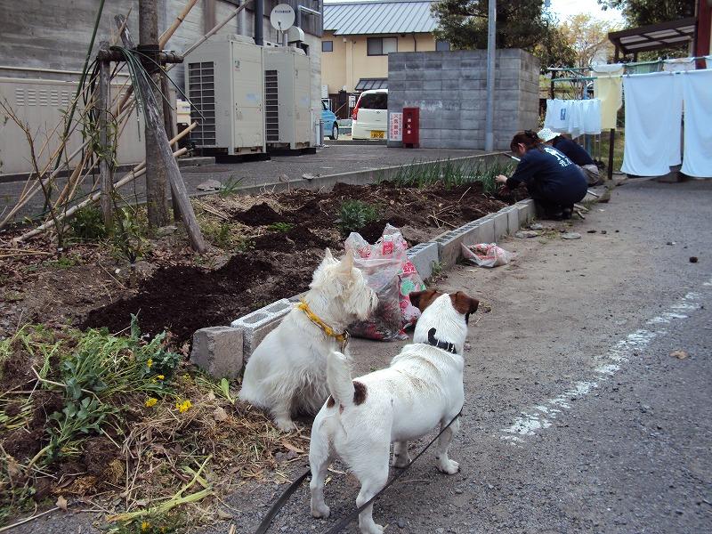 榎菜園♪_c0140982_16135651.jpg