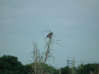 今日の鳥さん_e0028387_2348052.jpg