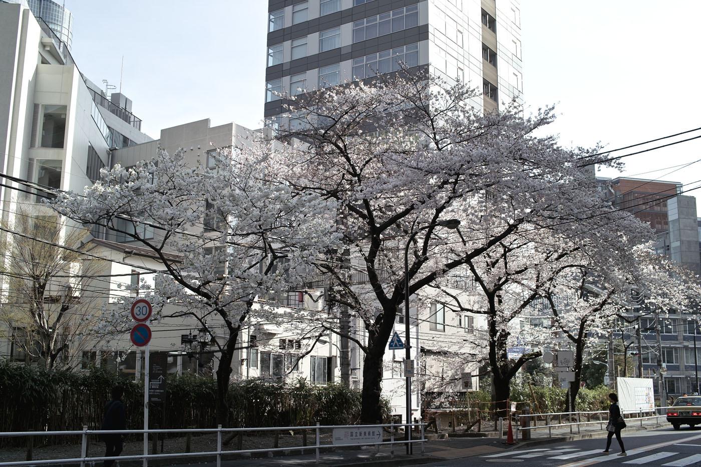 2011、六本木の桜。_c0120903_1215828.jpg