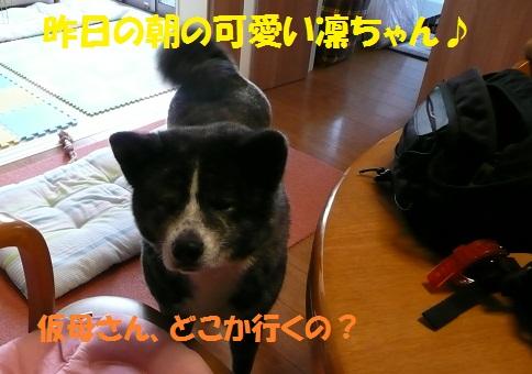 f0121712_1105216.jpg