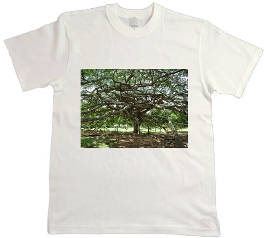 チャリティTシャツアート展2010ネット販売終了間近/24日チャリティコンサート@アートコンブレックス_f0006713_145841.jpg