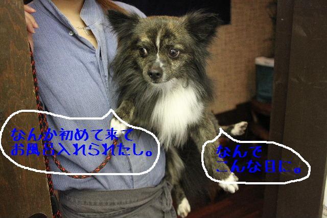 b0130018_1651073.jpg