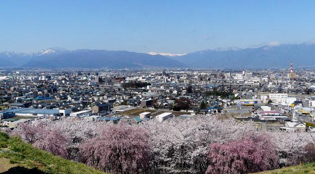 弘法山古墳の桜(松本市)_d0066822_21202019.jpg