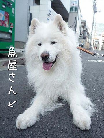 ダダ_c0062832_60498.jpg