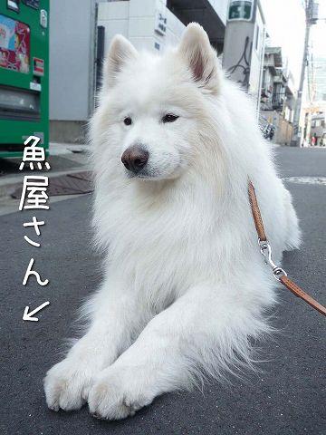 ダダ_c0062832_61040.jpg