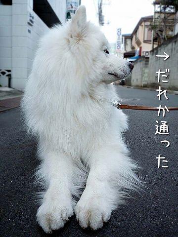 ダダ_c0062832_6138.jpg