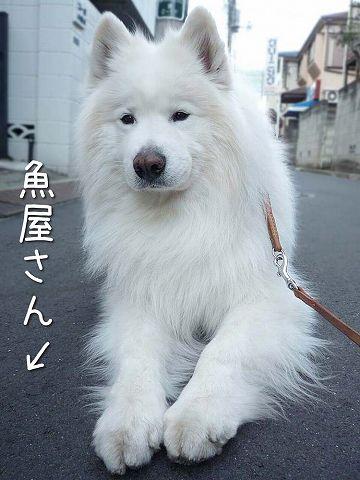 ダダ_c0062832_61750.jpg