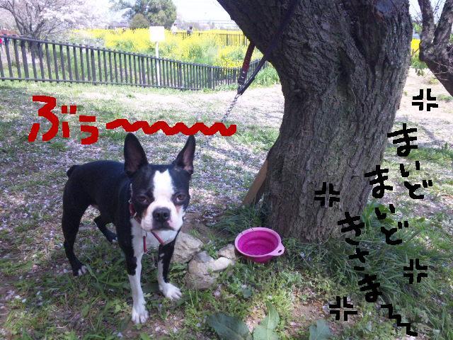 5ボステリと宴を★幸手市権現堂公園_d0187891_11551691.jpg