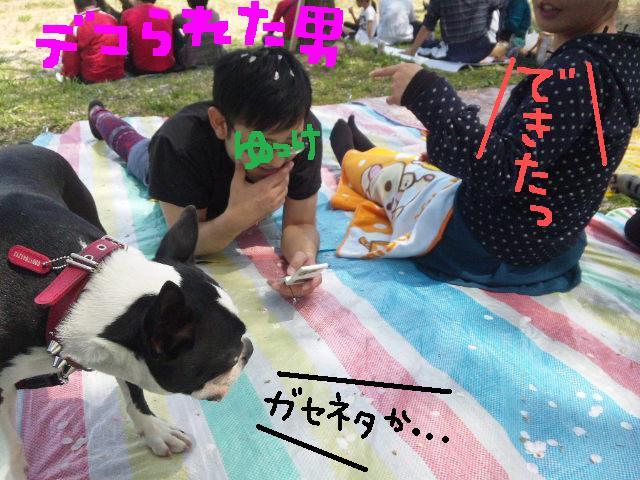 5ボステリと宴を★幸手市権現堂公園_d0187891_11563566.jpg