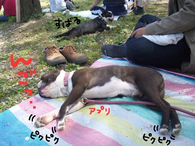 5ボステリと宴を★幸手市権現堂公園_d0187891_11564735.jpg