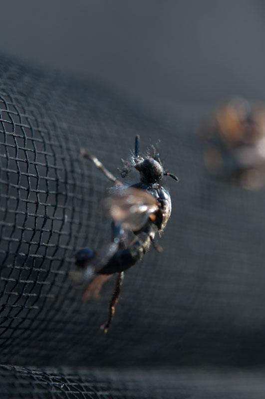 私設昆虫記-142 生と死の差分_f0215695_1434022.jpg