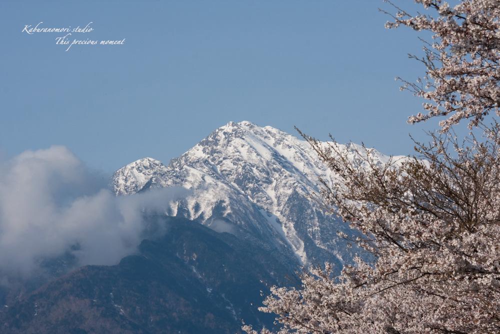 八ケ岳にも桜の季節がやって来ましたね_c0137403_9532619.jpg
