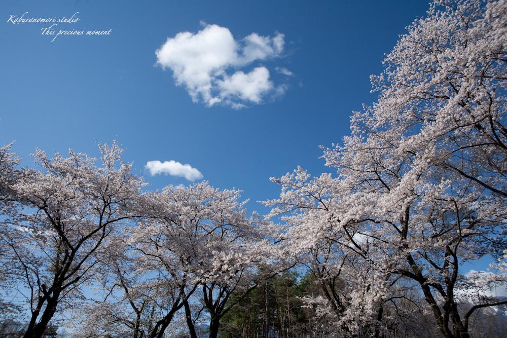 八ケ岳にも桜の季節がやって来ましたね_c0137403_956781.jpg