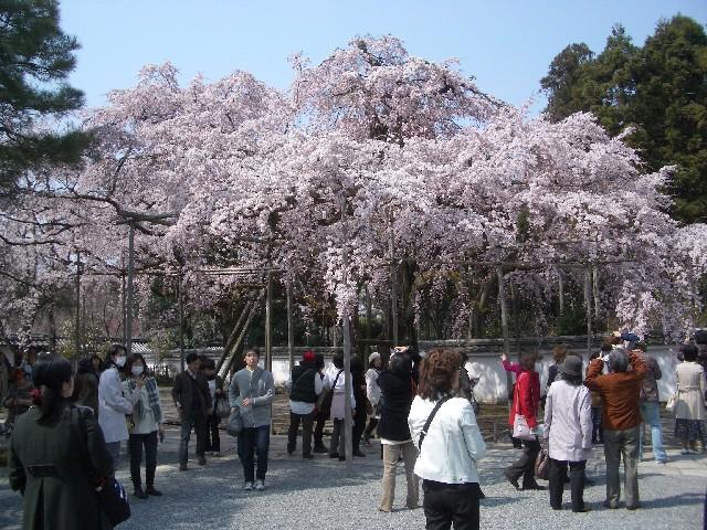 京都花見旅行3_a0047004_14215917.jpg