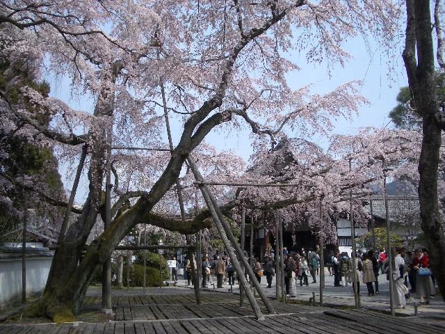 京都花見旅行3_a0047004_14254456.jpg